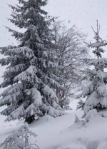 Карпати засипає снігом (фото, відео)