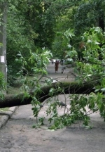 Негода позривала дахи і повалила дерева у кількох областях