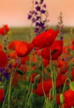 Сьогодні - День пам'яті та примирення