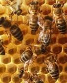 Україна за 10 днів вичерпала річну квоту на експорт меду і соків в ЄС
