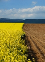 Українці тепер зможуть обмінювати земельні ділянки
