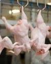ЄC частково зняв заборону на експорт української курятини