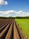 Уряд запровадить 2 програми фінансування для придбання землі