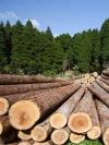 Україна обговорить із ЄС покарання за купівлю нелегальної деревини з України