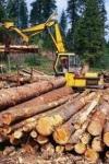У Раді розкрили деталі арбітражу з ЄС щодо лісу-кругляка