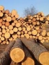 Голова екологічного комітету Ради збрехав про заборону вирубки лісів — ЗМІ