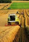 Уряд розподілив 4 мільярди на підтримку аграріїв
